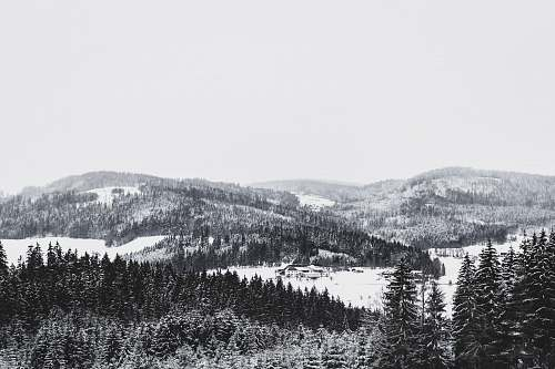 mountain photography of snow covered mountain and forest during daytime forest
