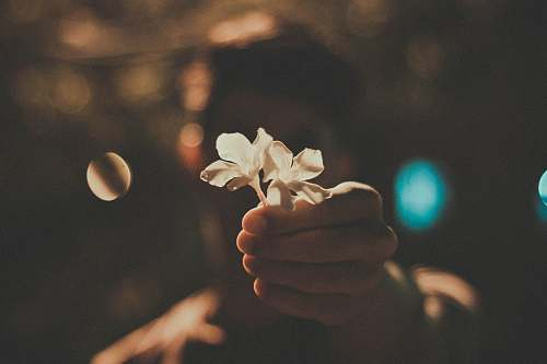 hand person holding white flowers flower
