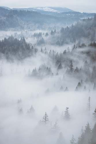 nature aerial photography of fog-covered forest landscape