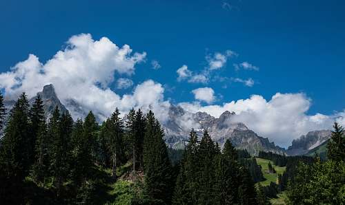 nature in distant brown mountain and green pine trees trees