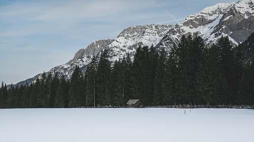 austria photo of trees near mountain alps outdoors