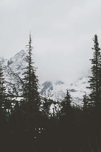 nature silhouette of trees and snowy mountains grey