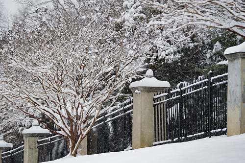 snow brown tree across black steel fence outdoors