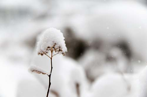 snow closeup photo of flower covered in snow winter