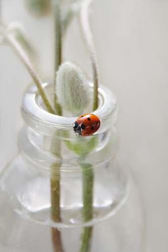 outdoors lady bug on clear glass bottle ice