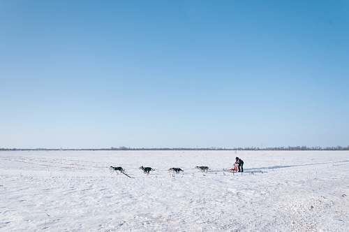 blue man and four dogs on snow field landscape