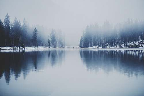 winter pine trees near water with fog landscape