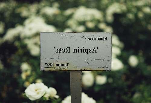 sign selective focus photography of Klaserose Aspiring Rose Tantau 1997 signage plant