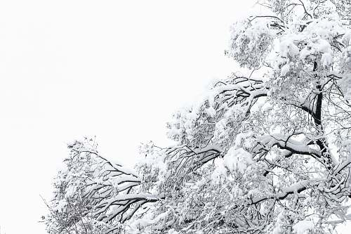 outdoors snow covered tree during daytime ice