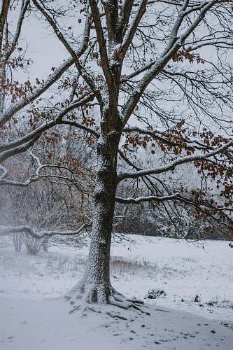outdoors tree covered by snow during daytime tree