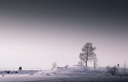 snow tree under gray sky winter