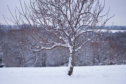 outdoors withered tree with snow snow