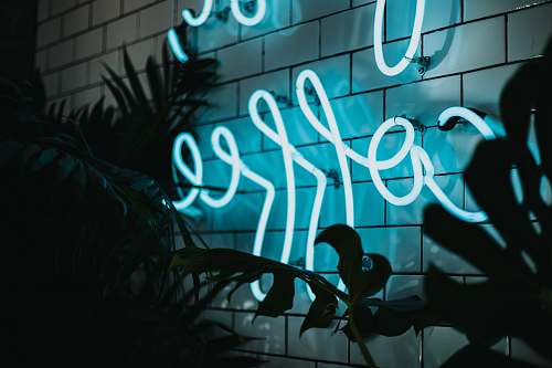 light Coffee neon signage turned on near plant beverly hills