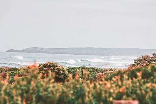 sea body wave of water coast