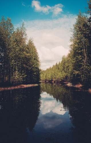 water river between forest trees