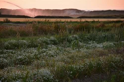 field white flowering plants during daytime grassland