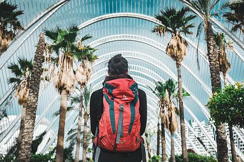 people man carrying backpack looking at palm trees during daytime human