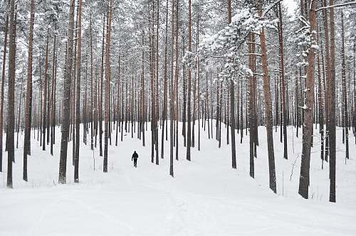 trees person walking on field of snow snow
