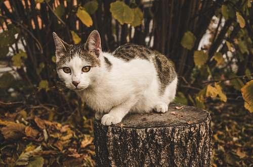 cat closeup photo of black and white tabby cat tree
