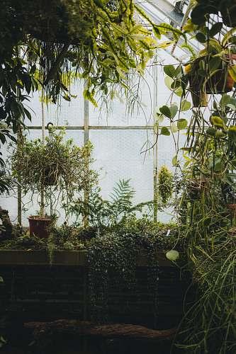 outdoors assorted plants inside greenhouse garden