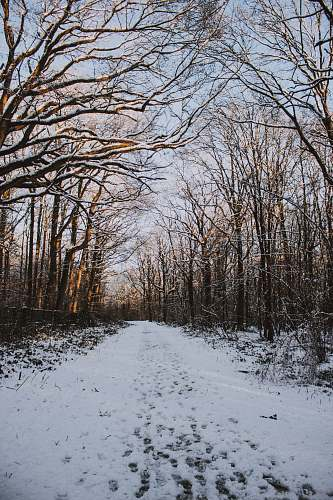 ground bare trees on snow covered road forest