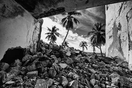 black-and-white grayscale photo of rocks and palm trees arecaceae