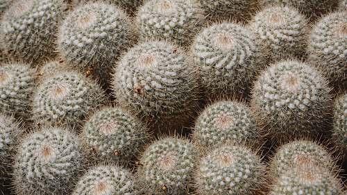 cactus green cactus animal