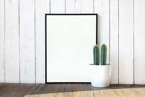 frame green cactus plant cactus