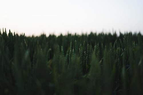 grass green grasses vegetation