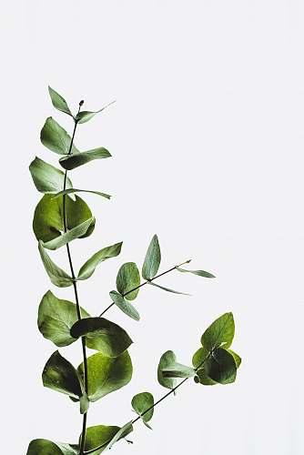 leaf green leaf minimal