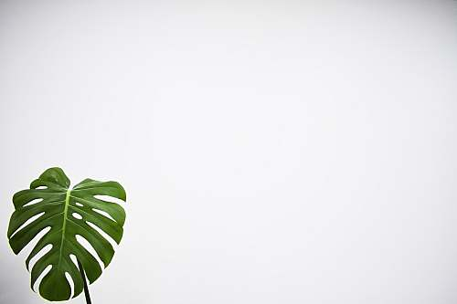 photo flora green leaf with white background fern free for commercial use images