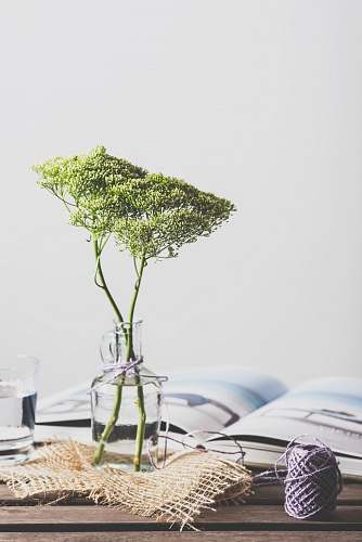 flower green leafed plant on glass vase interior
