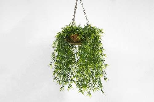 green green plant pot