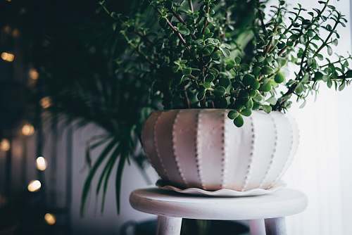 decoration green potted plant indoors