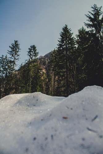 ice mountain peak and trees nature