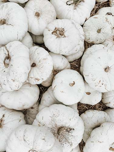 pumpkin pile of white squash vegetables food