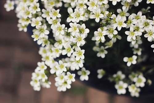flower potted white petaled flower blossom