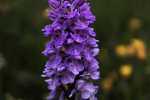 blossom purple petaled flowers southampton