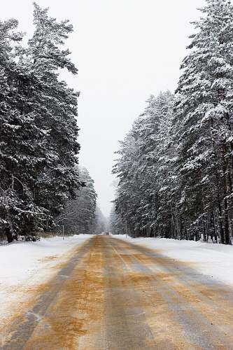 abies road covered in snow tree