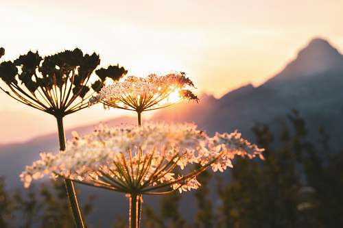 dill selective focus photograph of dandelion flora