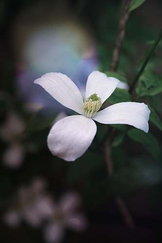 blossom selective focus photography of white 4-petaled flowers flower