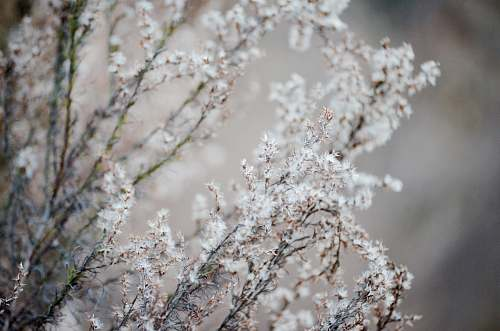 grey selective focus photography of white cluster flowers blossom