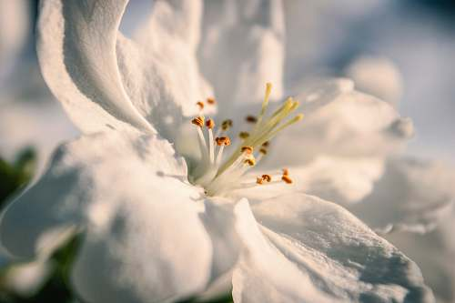 pollen selective focus photography of white petaled flower in bloom blossom