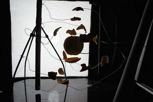 food silhouette of tripod leaf