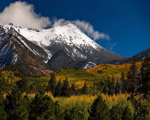 tree snow capped mountain near green field during dayhtime abies
