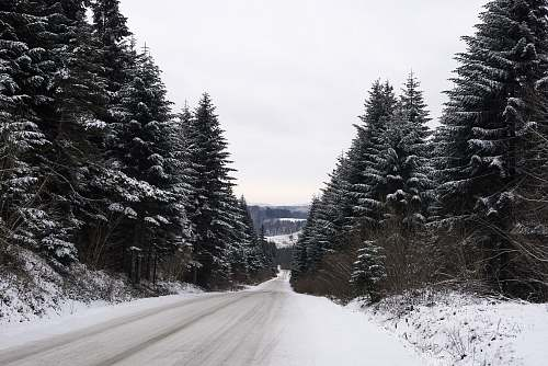 tree snow covered straight road abies