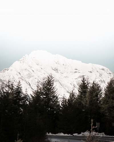 tree snowy peak mountain abies