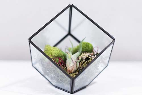glass square clear glass terrarium on white surface container