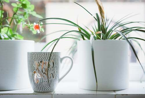 photo pot white and silver ceramic mug near flower pot jar free for commercial use images