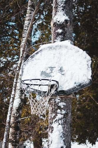 hoop white basketball board tree